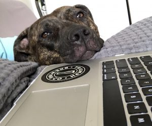 Veterinary Telemedicine